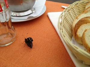 Our little visitor at our table...