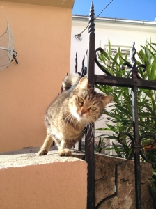 Crikvenica kitty cat