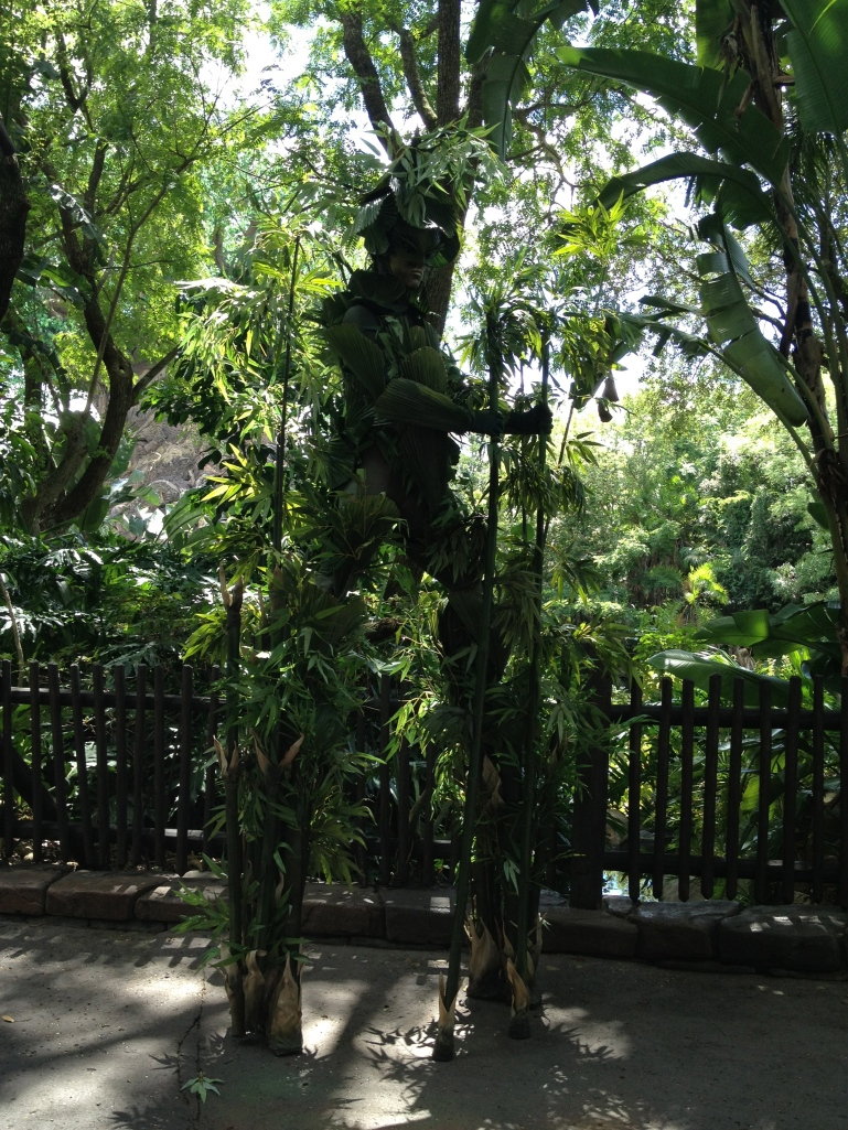 Bamboo in Disney's Animal Kingdom