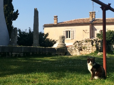 Ancient pillars and an adorable kitty!