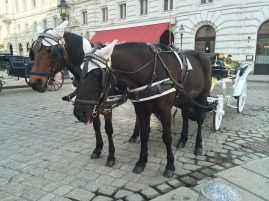 Horse carriage rides