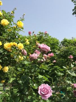 Flowers in the Volksgarten