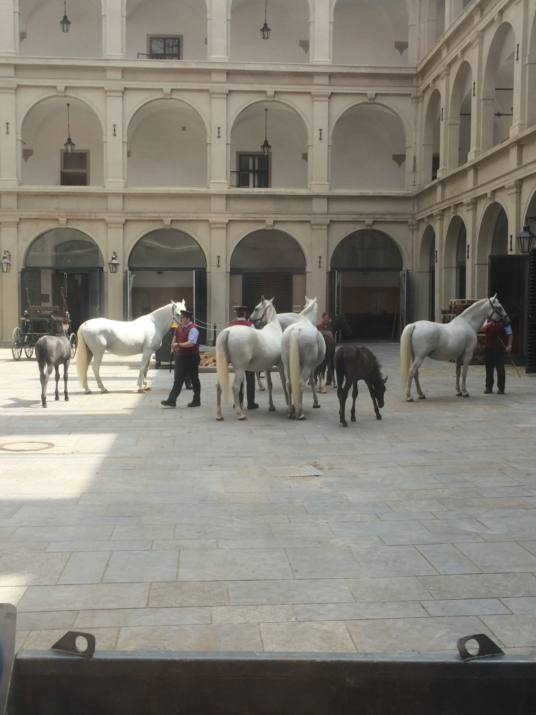 The famous horses, young and old!