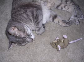 Mousey toy!