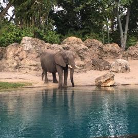 Elephant on the Safari