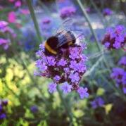 Vigeland : Bee