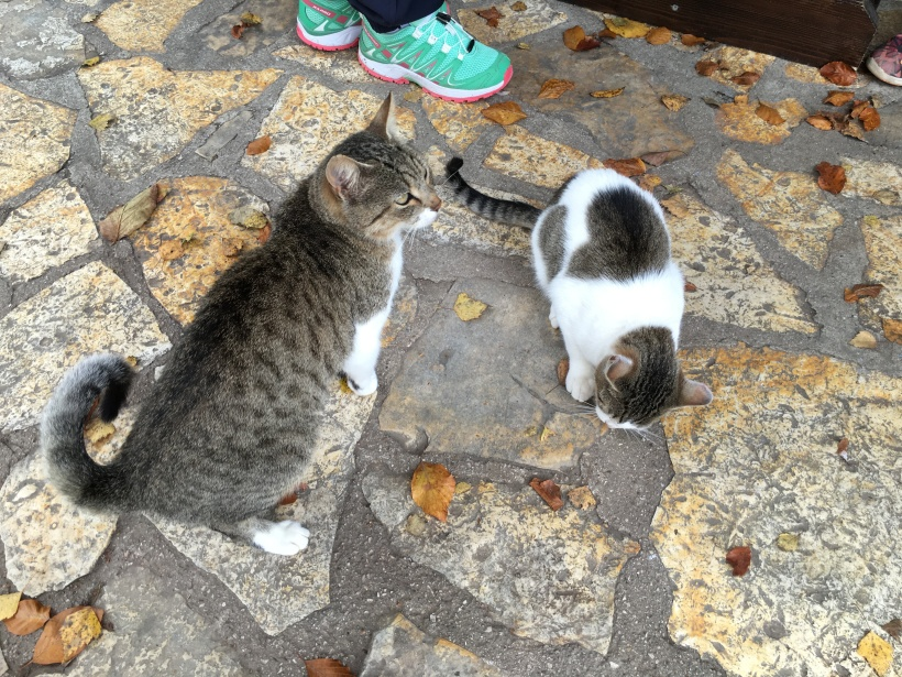 Cats of Plitvice