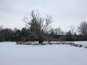 The frozen Graf Pond